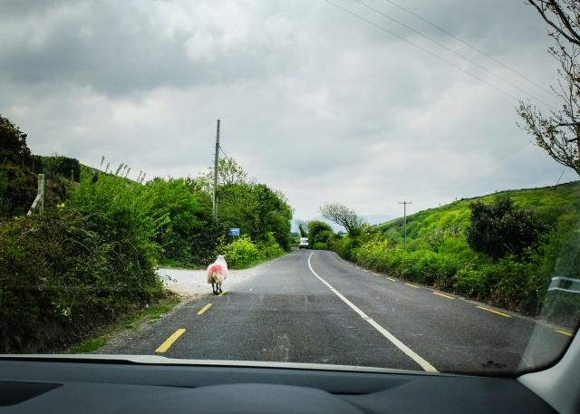 New Ireland-300