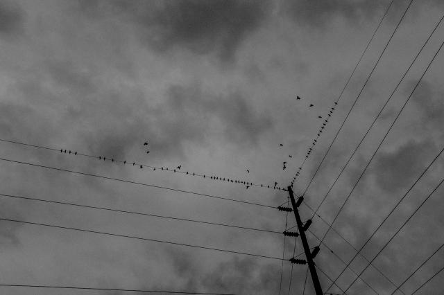 Street Blog-21