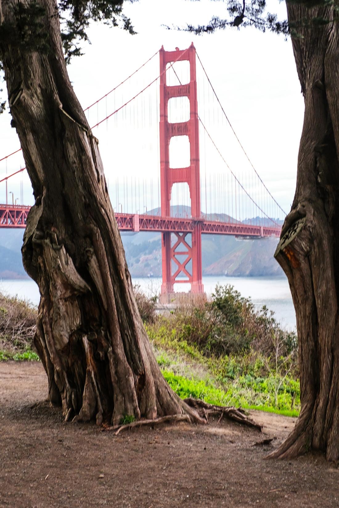 San Fran Day 1--5