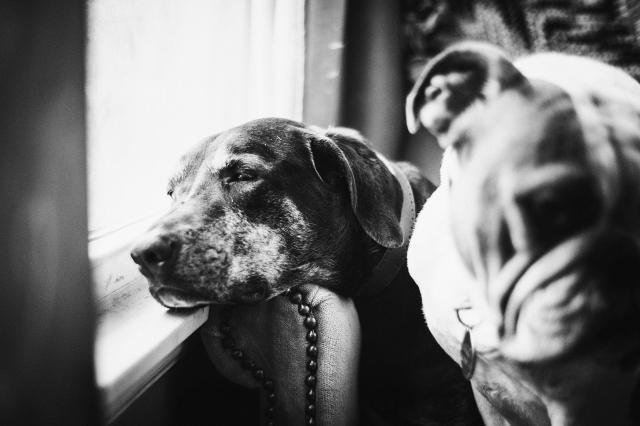 DogDays--2