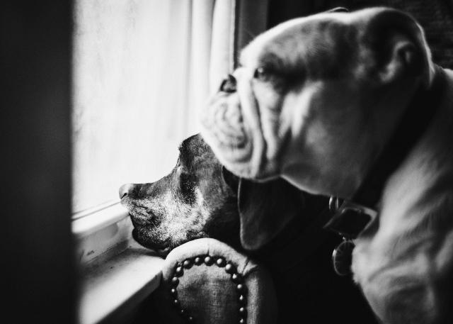 DogDays--3