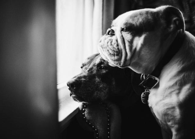 DogDays--4