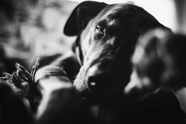 DogDays--6